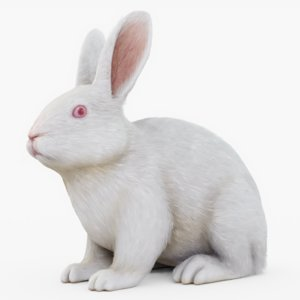 3D rabbit fur