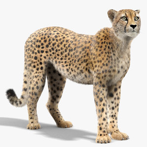 3D cheetah rigged