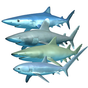3D ocean predators model