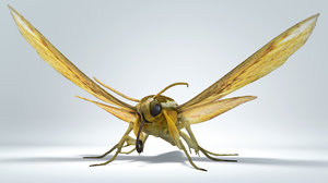 3D moth rigged