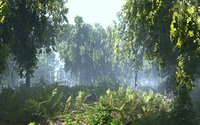 Birch-Tree Animated Forest