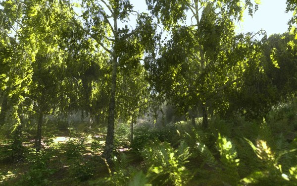 birch-tree forest tree 3D model
