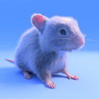 realistic white mouse - 3D model