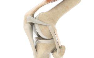 knee 3D