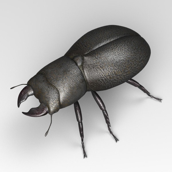 beetle bug insect 3D