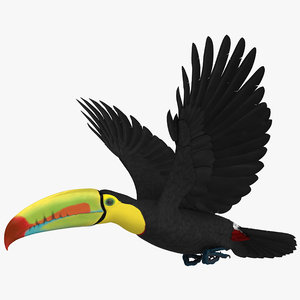 rigged keel-billed toucan model