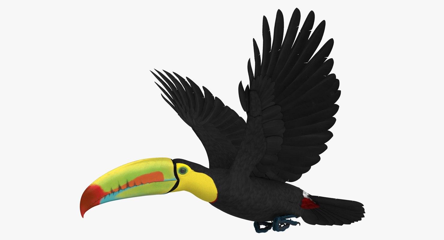 rigged keel-billed toucan model