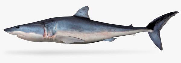 shortfin mako shark 3D model