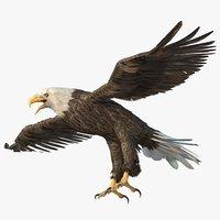 bald eagle model