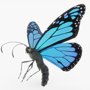 3D monarch butterfly rigged model