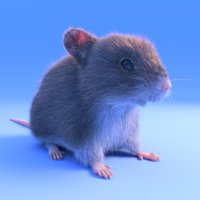 realistic brown mouse - 3D model