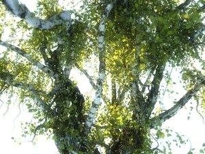 3D tree scanned model