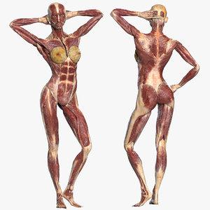3D model muscular rig male