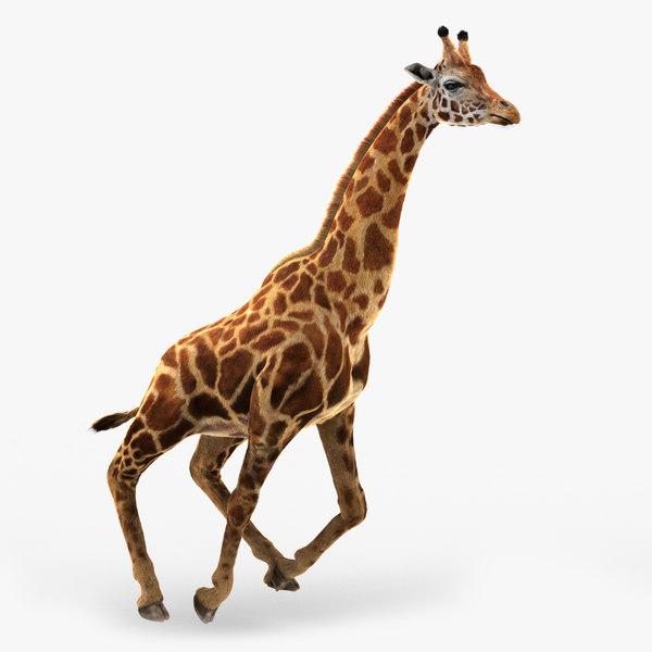 photorealistic giraffe rigged fur 3D model