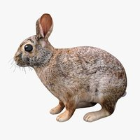 realistic rabbit 3D model