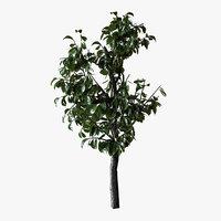 Small Bush Plant