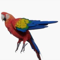 Red Macaw Parrot (Rigged)