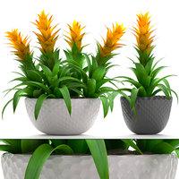 3D tropical plant bromelia model