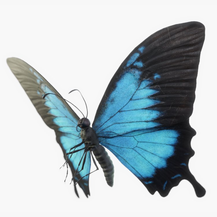 3D model butterfly fly ulysses