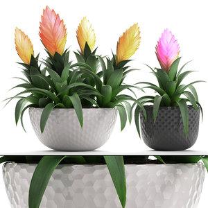 3D tropical plant bromelia