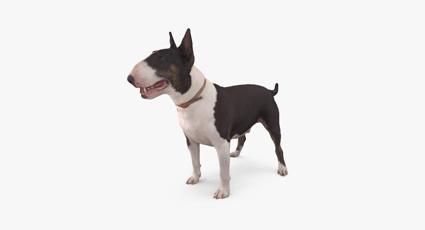 dog bull terrier 3D