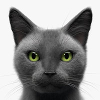 grey cat hair 3D model