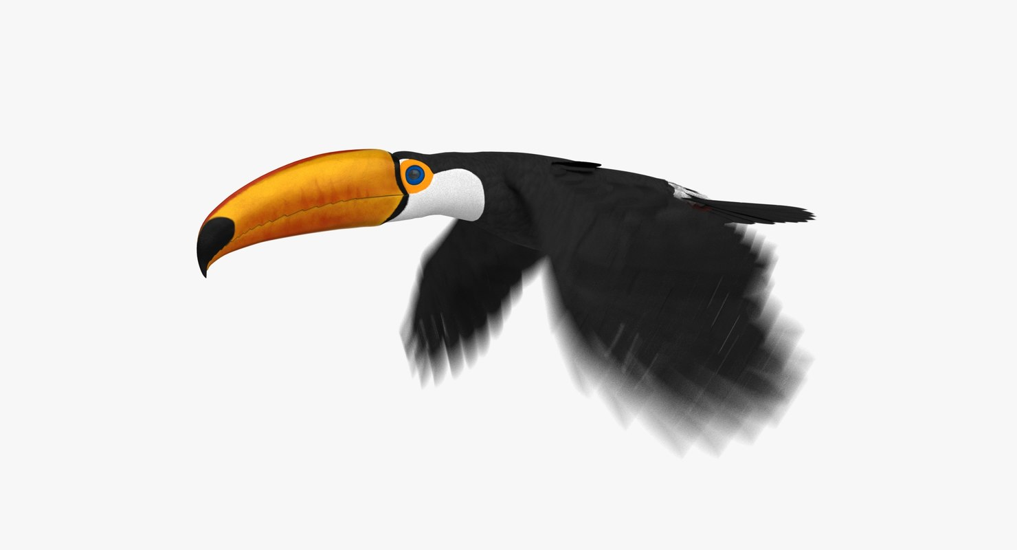 3D toco toucan animation