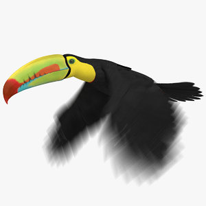 keel-billed toucan animation 3D model