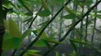 bamboo stylized 3D