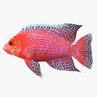 3D peacock fish model