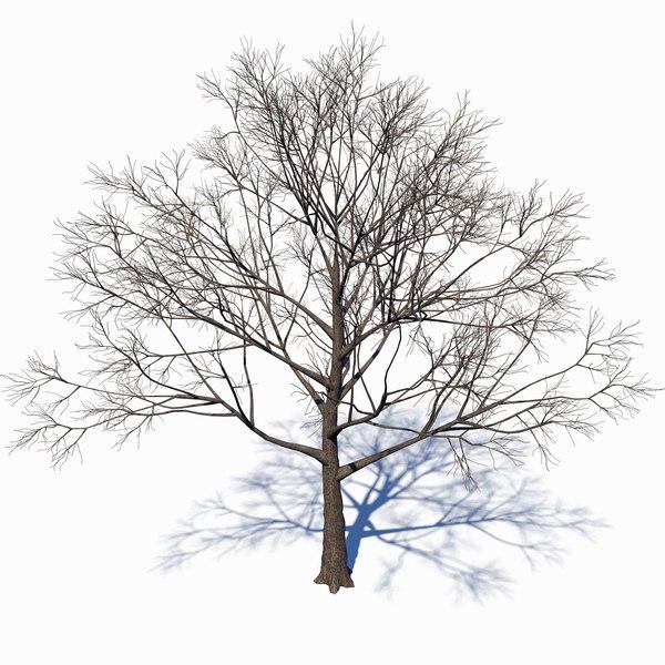 3D dead tree model