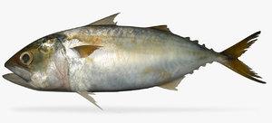 indian mackerel bangada 3D model