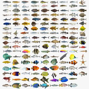 fish wrasse koi 3D model