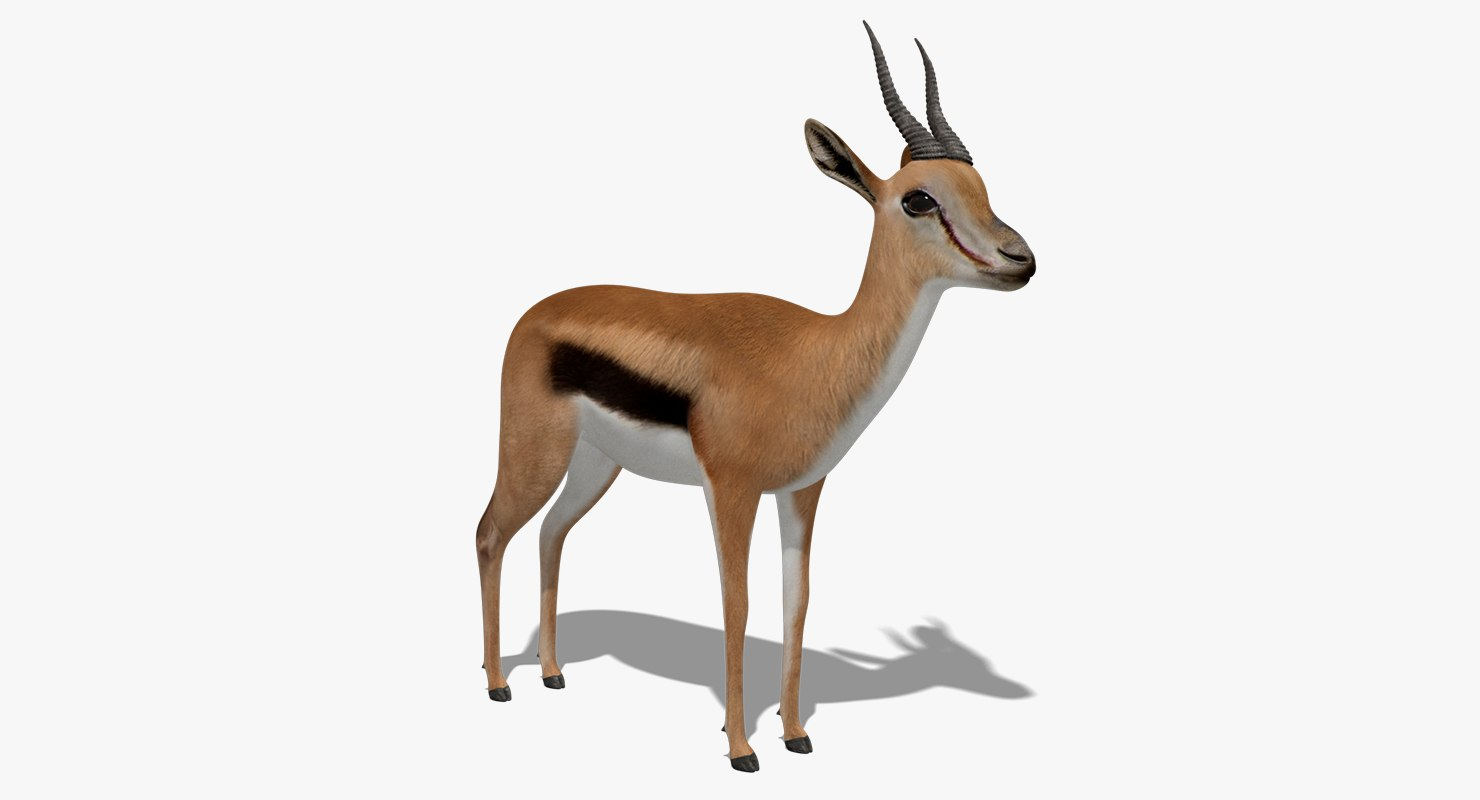 gazelle animation 3D model