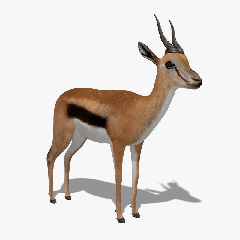 gazelle animation 3D model