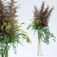 realistic eucalyptus grasses pennisetum model
