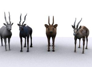 3D deers model