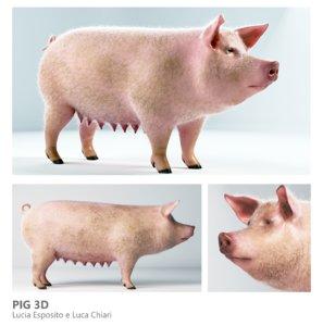 pig arnold xgen 3D model