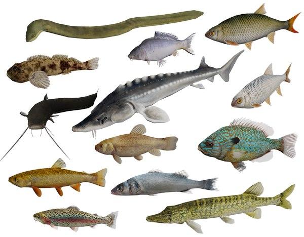 3D model 13 freshwater fish