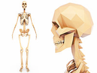 Human Skeleton Low Poly