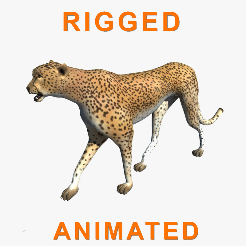 3D cheetah rigged animation