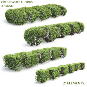 hedges lucidus 3D model