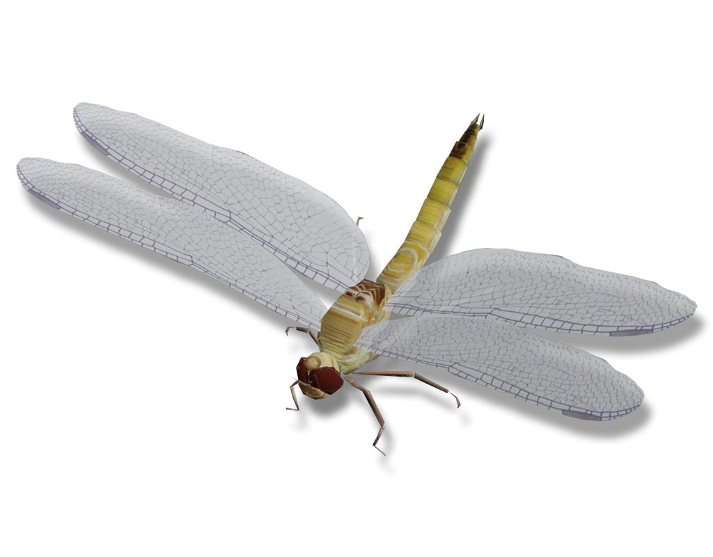 3D model dragonfly polys