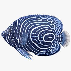 emperor angelfish 3D model