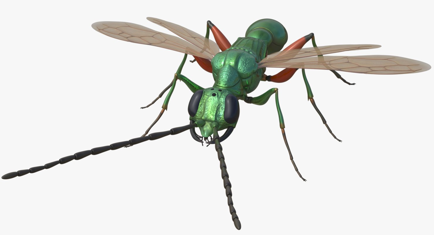 3D cockroach wasp