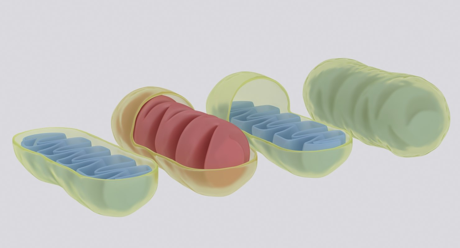mitochondrions 3D
