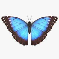 realistic blue morpho butterfly model