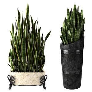 sansevieria home plant 3D model