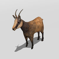goat antelope 3D model
