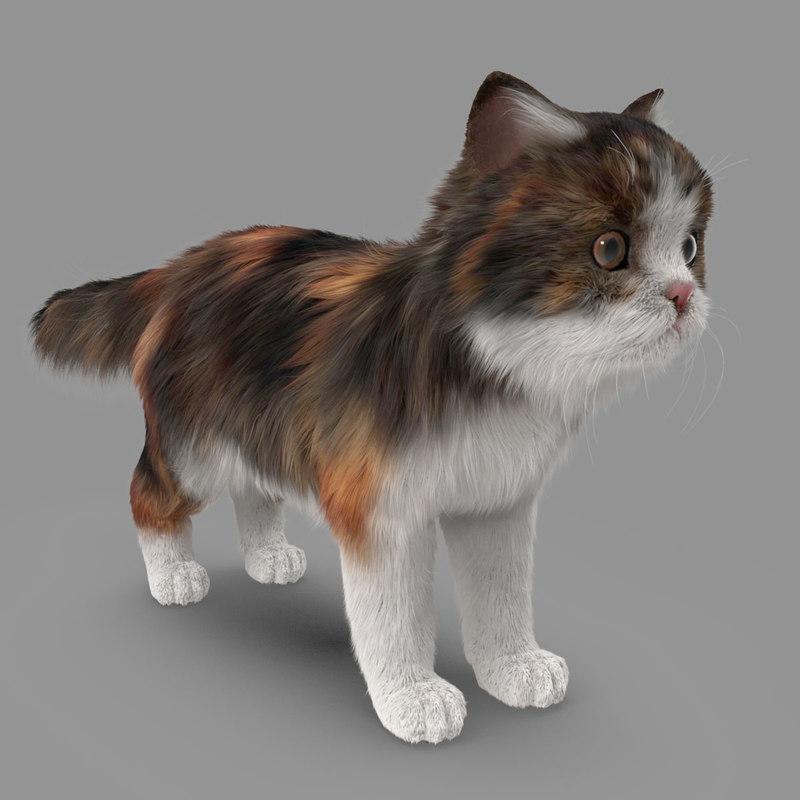 cat fur modeled 3D model